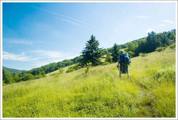 Final Meadow