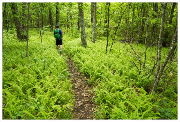 Adam Hiking the Jones Mountain Trail