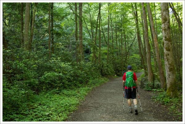 Lush Green Woods