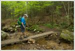 Stream Crossing on Mt. Pemigewasset Trail