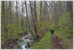 Cornelius Creek