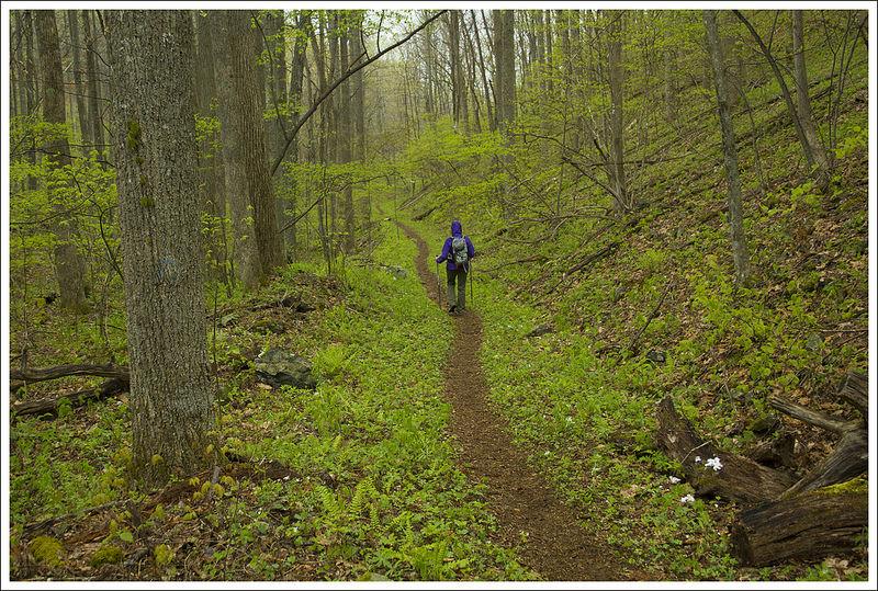 Walking the Cornelius Creek Trail