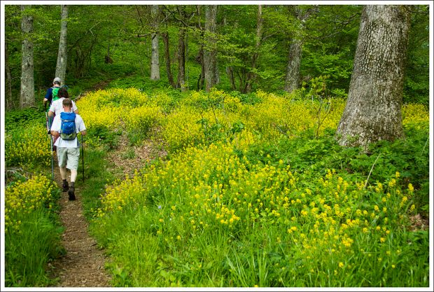 Hiking Along the Appalachian Trail