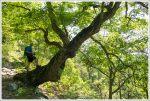 A Cool Tree on Signal Knob Hike
