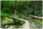 Another Easier Log Bridge
