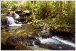 Pretty Stream Along the Trail