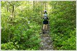 Walking Along the Signal Knob Ridge