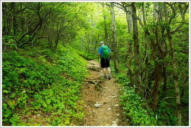 Gregory Bald Trail