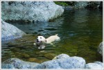 Dogs Swimming at Rocky Falls 2