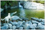 Dogs Swimming at Rocky Falls