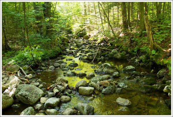 Stream on Rocky Falls Trail