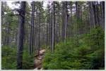 Pretty Pines
