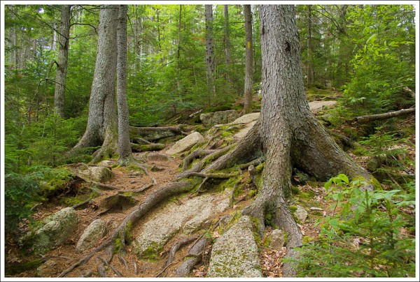 UNH Trail Rocks and Roots