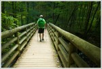 Bridge on the Cascades Trail