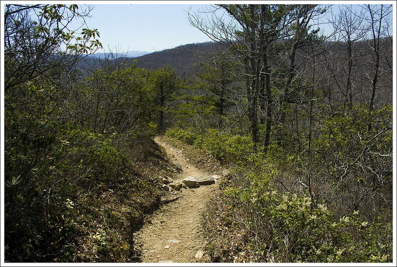 Climbing Cove Mountain