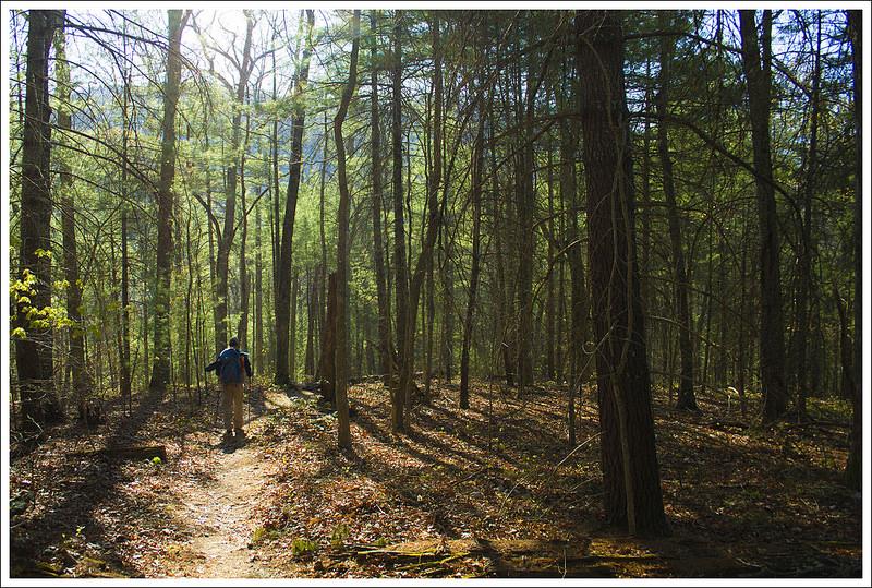 Descending to Jennings Creek