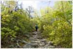 Rocky Grade on Roaring Run Gap Trail