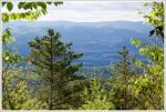 Views Through the Trees