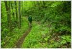 Lush Green Trail