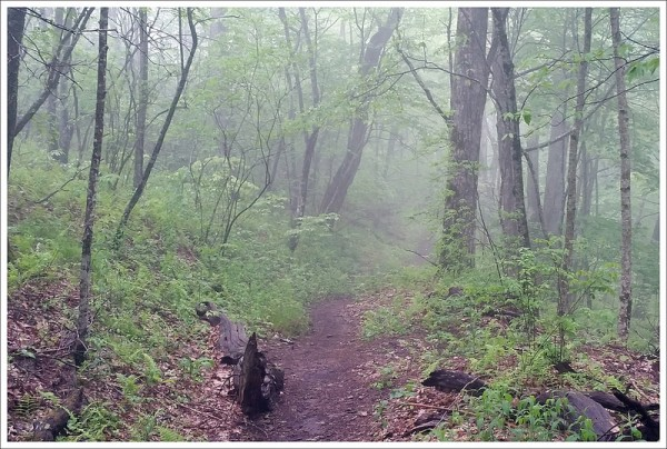 Fog and Rain Along the Appalachian Trail on Standing Indian