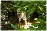 Maia Enjoys a Shady Pool