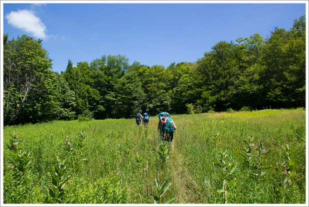 Meadows on the Rohrbaugh Trail