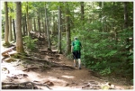 Rooty Trail