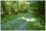 Appalachian Trail Near Mt. Cube