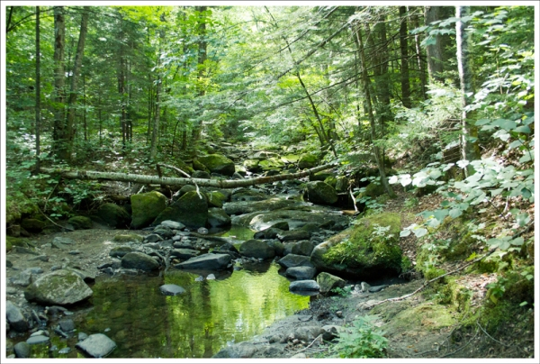 Brackett Brook