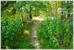Tall Goldenrod Along Trail