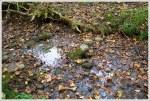Dank Water Source