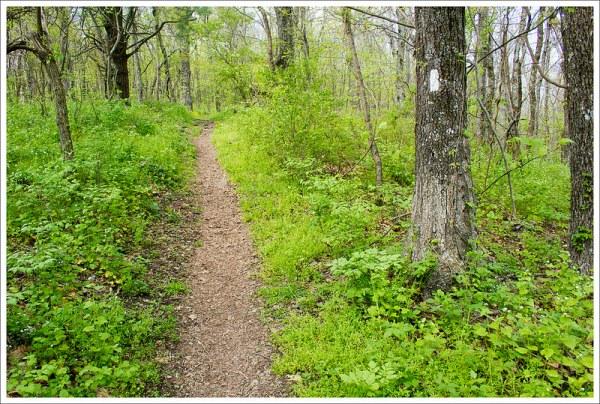 A Pleasant Walk on the Appalachian Trail