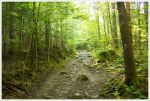 Coppermine Trail