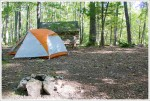 Tent Site Behind the Shelter