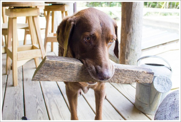 Woods Hole Doggy