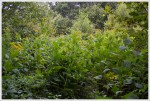 Overgrown Appalachian Trail