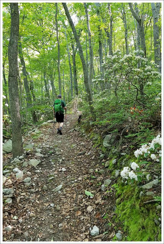 Adam on the Massanutten Trail