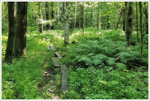Appalachian Trail: Etna to Hanover
