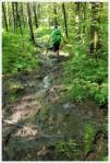 Mud on the Appalachian Trail