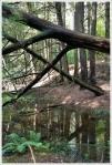 Swampy Appalachian Trail