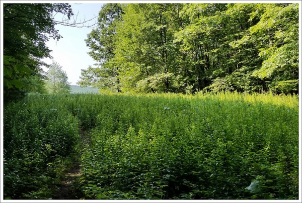 Meadows Along the Appalachian Trail