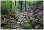 Bucktail Trail