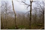 Lewis Mountain View