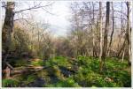 Pocosin Spring