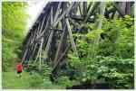 Bear Hang on a Bridge