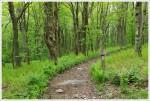 Little Wilson Creek Wilderness