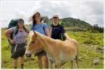 Grayson Highlands Ponies