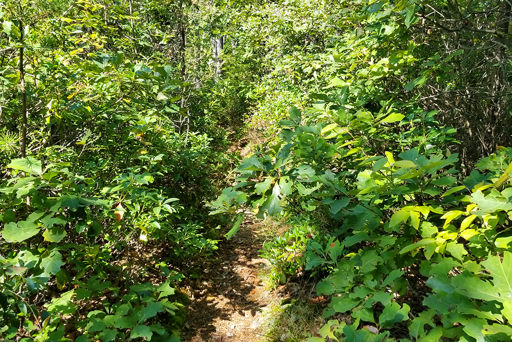 The trail was very overgrown.